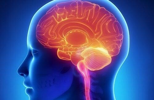 脳を若く保つ秘訣とアドバイス