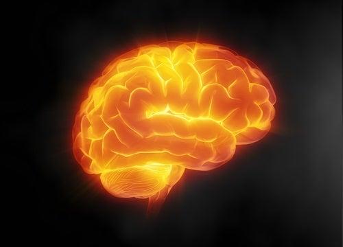 脳への効果