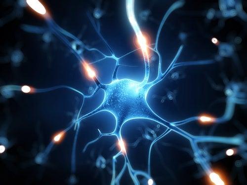 レスベラトロールの脳への効果