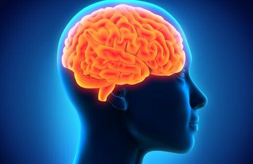 記憶力を強化する食べ物