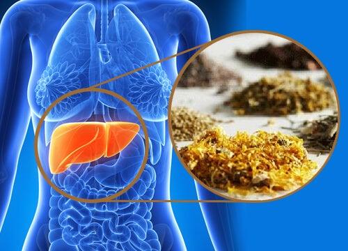 肝臓を浄化してくれる7つの薬草たち