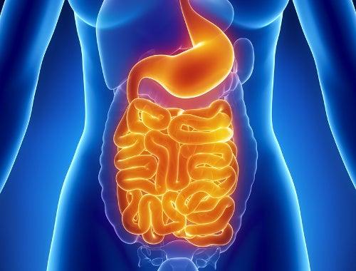 腸内細菌消化システム