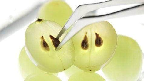 ブドウの種