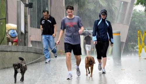 雨の中で犬の散歩