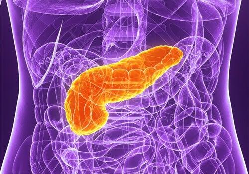 膵臓をケアするための5つのアドバイス