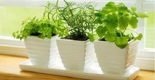 正エネルギーを惹きつける/植物トップ10
