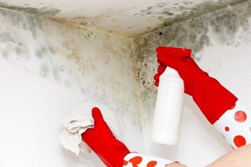家庭のカビを除去する方法