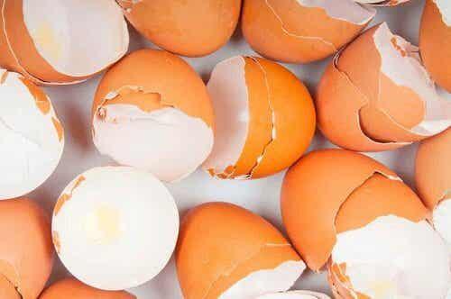 エッ!とおどろく卵の殻の使いみち