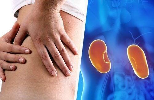 女性に多い!腎臓の感染症、腎盂腎炎の原因と症状