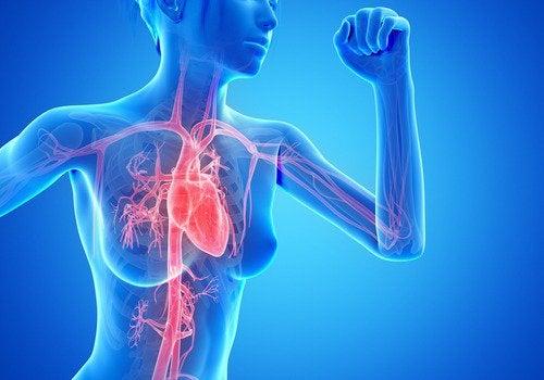 背中の脂肪と有酸素運動