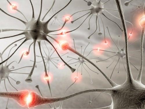 歩くことはどう脳の役に立つのか