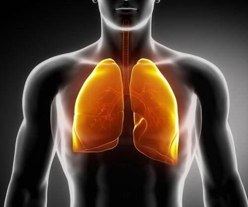 肺を強くする3種類のお茶