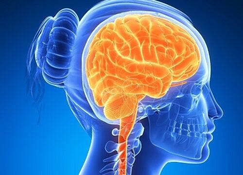 脳を活性化させる6つの食品