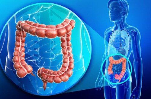 健康的な大腸と減量についてのコツ