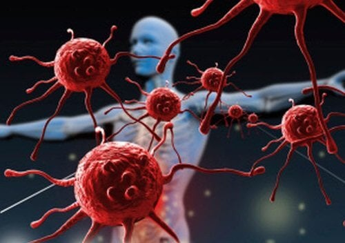 エキストラバージン オリーブオイル で免疫力アップ