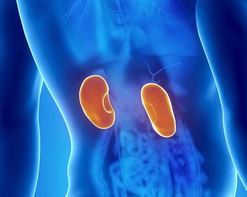 腎臓疾患の症状8つ