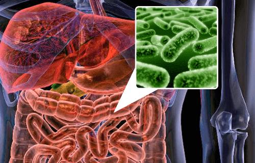 腸内細菌叢を回復させる5つの食品