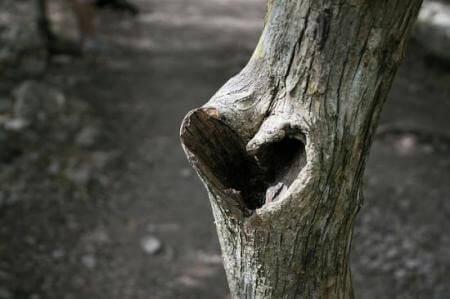 2-heart-tree