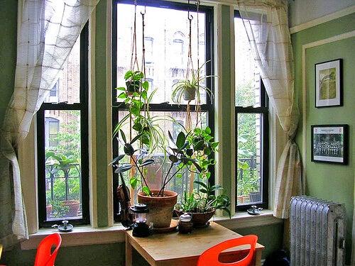 2-plants