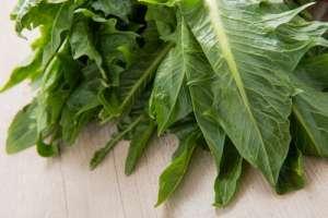 3-緑の葉
