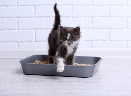 5-cat-litter