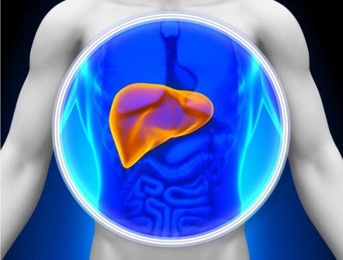 脂肪肝に効く自然療法