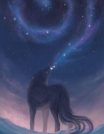 belleza-lobo