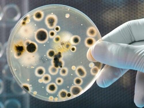 ご用心!/お金にはこんな細菌がついてくる!