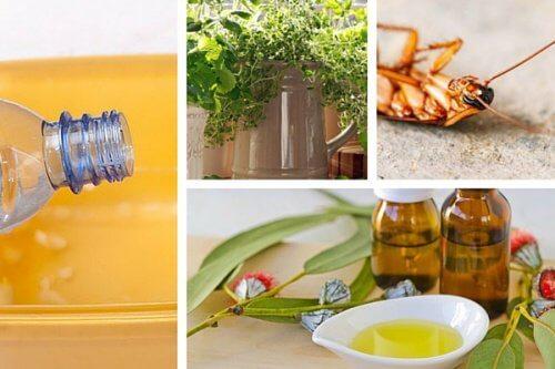 カラダと環境にやさしい虫除け法