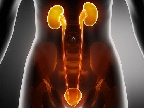 尿路感染症に効果的な自然療法