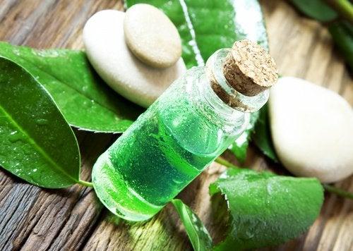 Aceite-esencial-de-árbol-de-té-500x356