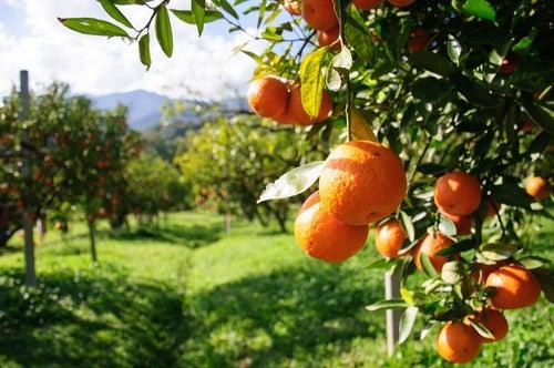 Naranja-500x332