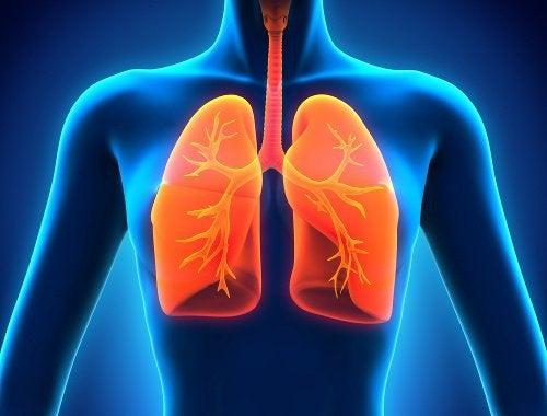 肺の健康のために:/食事に取り入れたい食べ物9種類