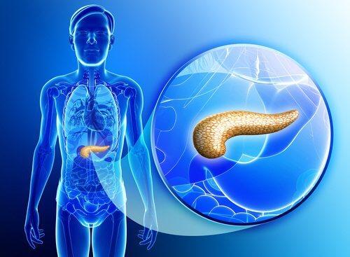 膵臓をデトックスする自然療法