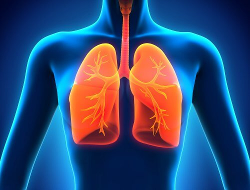 4-lungs