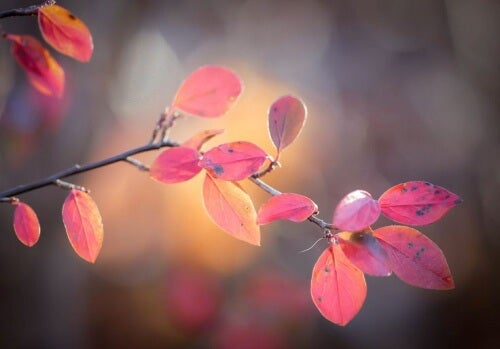 Red-leaves-representing-emptiness