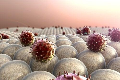 Strengthen-the-immune-system