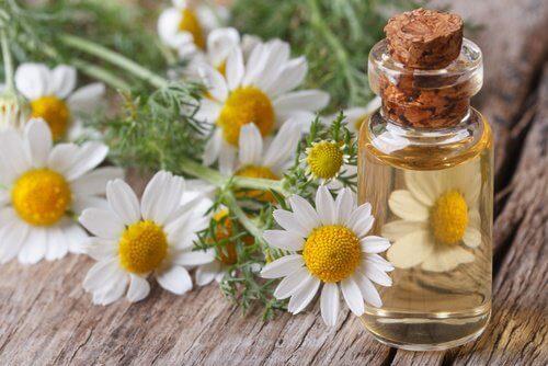 chamomile-massage