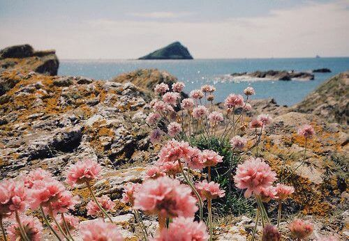 2-island-flowers