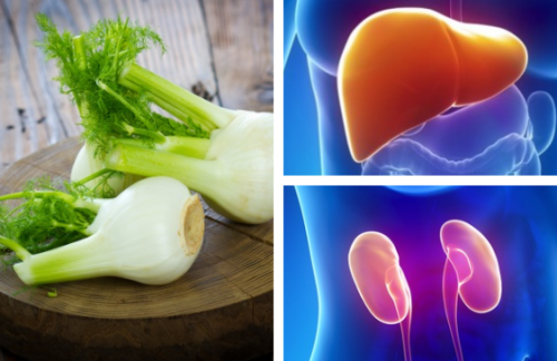 フェンネル:肝臓と腎臓を治癒する伝統療法