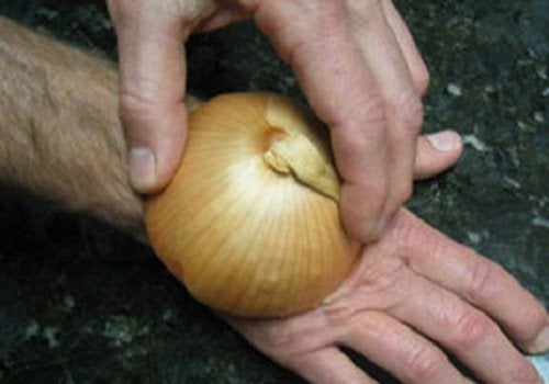 bite-onion