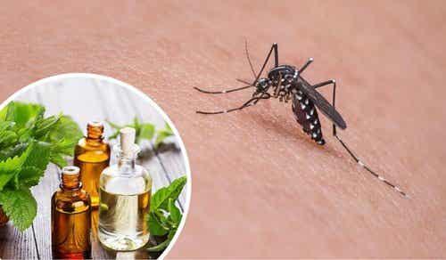 虫除け効果抜群!蚊を撃退するハーブ11種