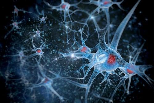 prevents-neurodegenerative-diseases