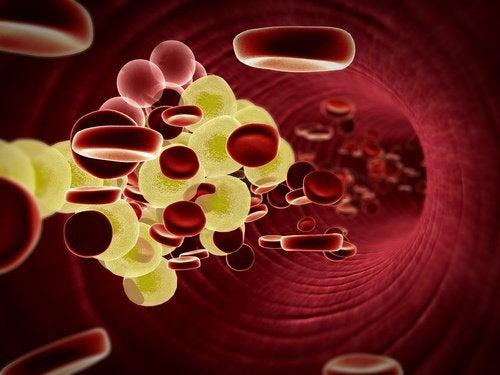2-blood-cells