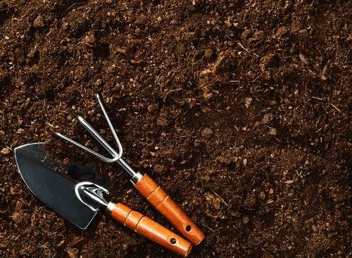種を植える