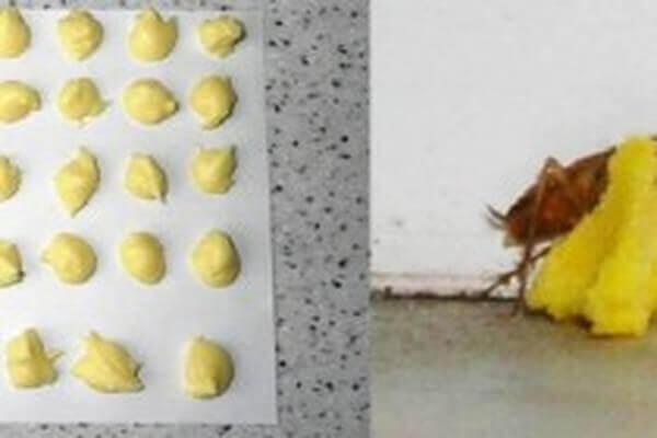 boric-acid-egg-poison