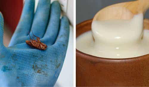 ゴキブリを永久に追い出す方法