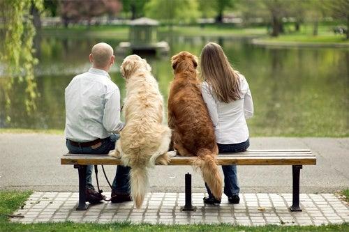cuando-un-perro-es-educado-por-varias-personas_eu3lg-500x333