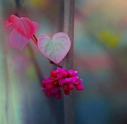 heart-shaped-flowers-representing-the-beauty-of-existing