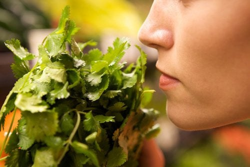 olor-alimentos-500x334